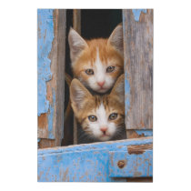 "Cute Cat Kittens in a Blue Vintage Window Photo """" Faux Canvas Print"