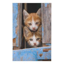 "Cute Cat Kittens in a Blue Vintage Window Photo """" Faux Canvas Print"