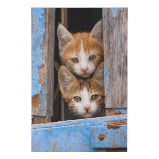 cute cat kittens in a blue vintage window photo faux canvas print