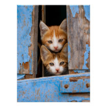 "Cute Cat Kittens in a Blue Vintage Window Photo "" Poster"