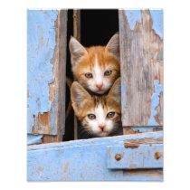 Cute Cat Kittens in Blue Vintage Window Paperprint Photo Print