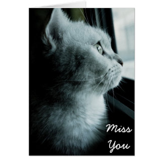 Cute cat looking through the window greeting card