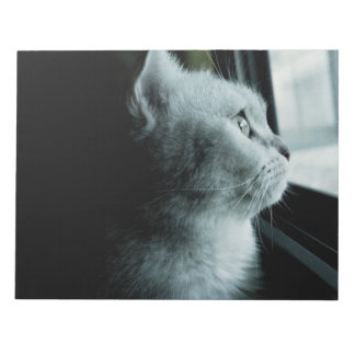 Cute cat looking through the window notepad