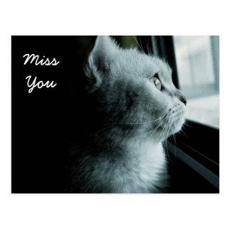 Cute cat looking through the window postcard