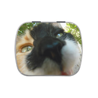 Cute cat nose up photography jelly belly candy tin