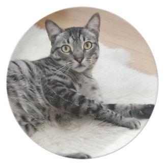 Cute cat posing dinner plate