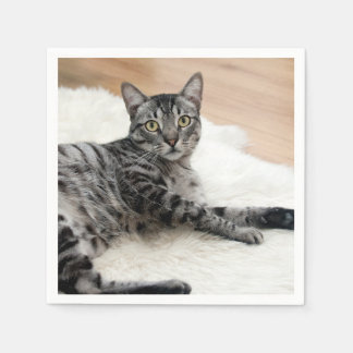 Cute cat posing paper napkin