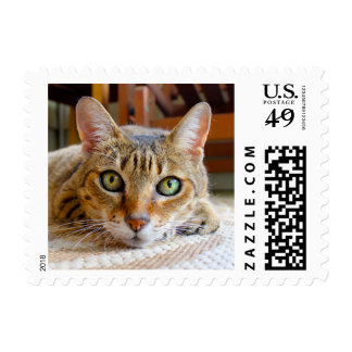 Cute Cat postage stamps