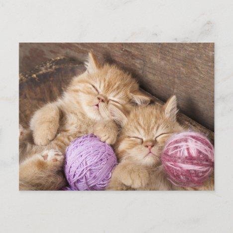 Cute Cat Postcard