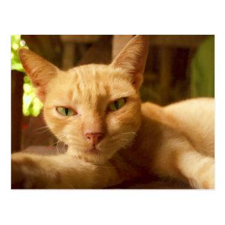 Cute Cat Products Postcard