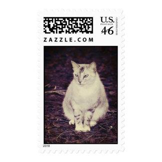 Cute cat stamp