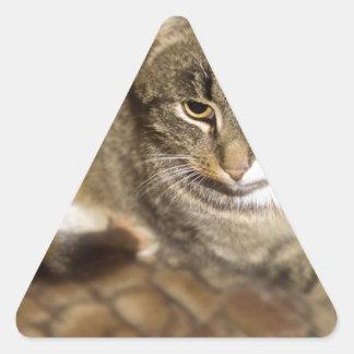 Cute Cat Triangle Sticker