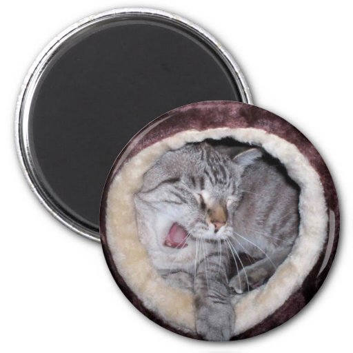 Cute cat yawning 2 inch round magnet