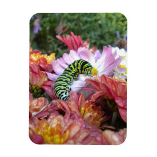 Cute Caterpillar on Bed of Mums Magnet
