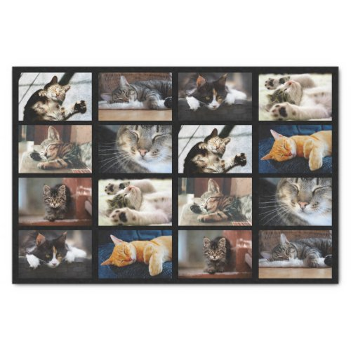 Cute Cats and Kittens Photo Template on Black Tissue Paper
