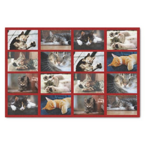 Cute Cats and Kittens Photo Template on Dark Red Tissue Paper