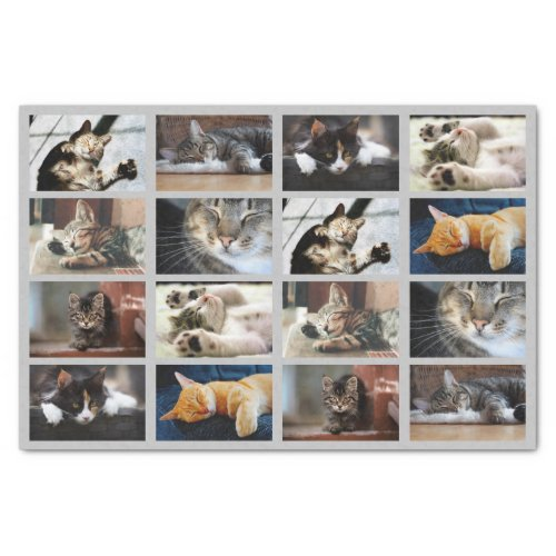 Cute Cats and Kittens Photo Template on Gray Tissue Paper