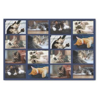 Cute Cats and Kittens Photo Template on Navy Blue Tissue Paper