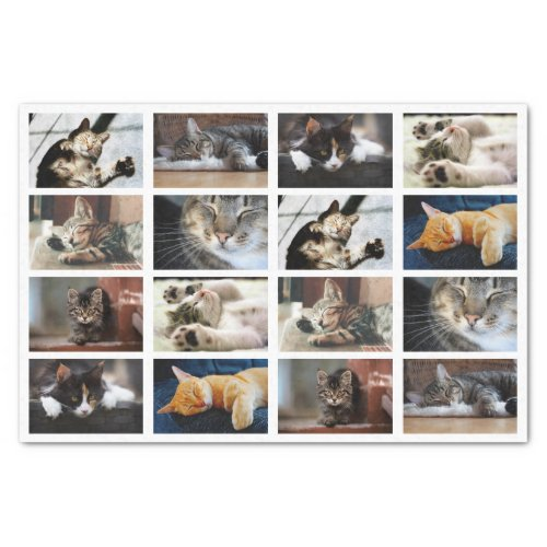 Cute Cats and Kittens Photo Template on White Tissue Paper