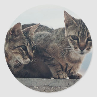 Cute Cats Duo Round Stickers