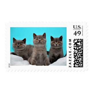 Cute cats stamp