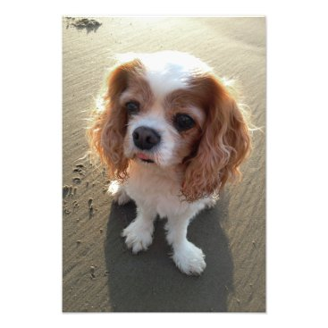 Beach Themed Cute Cavalier King Charles Spaniel Dog at Beach Photo Print