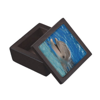 Cute Chattering Dolphin Premium Jewelry Boxes