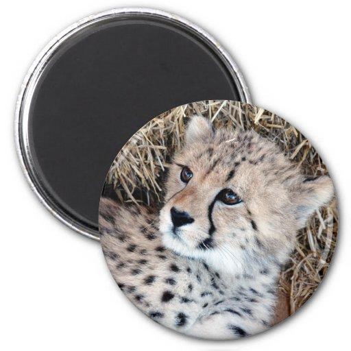 Cute Cheetah Cub Photo 2 Inch Round Magnet