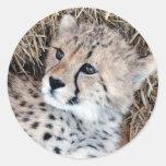 Cute Cheetah Cub Photo Classic Round Sticker