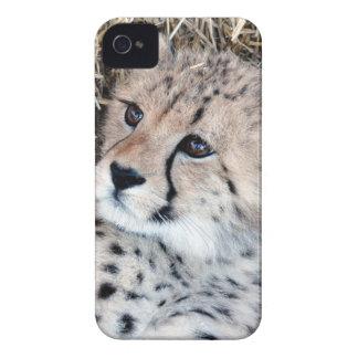 Cute Cheetah Cub Photo iPhone 4 Covers