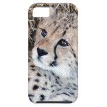 Cute Cheetah Cub Photo iPhone SE/5/5s Case