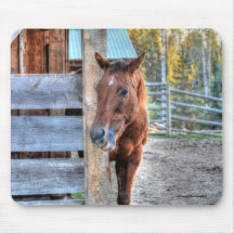 Cute Chestnut Horse Mare Photo Gift 2 Mouse Pad
