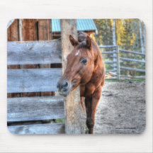 Cute Chestnut Horse Mare Photo Gift Mousepad