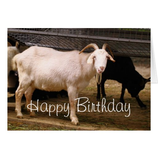 Cute Chewing Goat Birthday Greeting Card