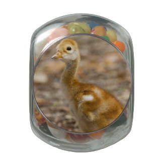 Cute Chick Glass Candy Jars