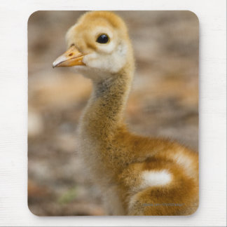 Cute Chick Mouse Pad