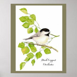 Cute Chickadee Bird in Poplar Tree  Sweet friendly Poster