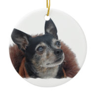 Cute Chihuahua Ornament