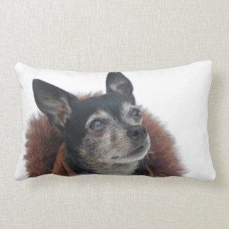 Cute Chihuahua Photos Pillow