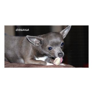 Cute Chihuahua Puppy Card