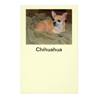 Cute Chihuahua Resting Flyer