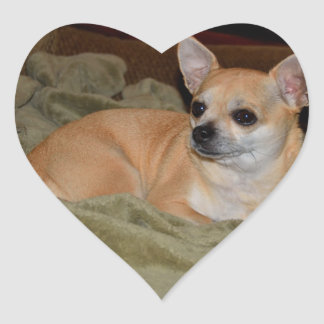 Cute Chihuahua Resting Heart Sticker