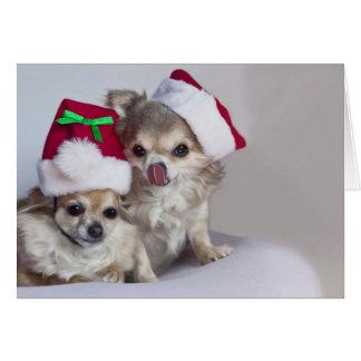 Cute chihuahuas Christmas Card