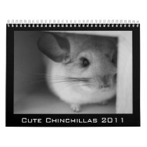 Cute Chinchilla Calendar 2011