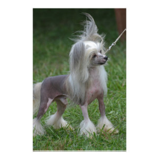 Cute Chinese Crested Dog Custom Stationery