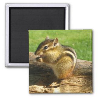 Cute Chipmunk 2 Inch Square Magnet