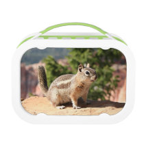 Cute Chipmunk, Bryce Canyon Lunch Box