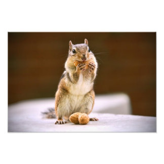 Cute Chipmunk Eating a Peanut Photo Print