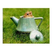 Cute Chipmunk in Teapot Postcard