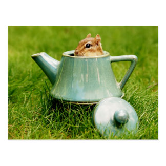 Cute Chipmunk in Teapot Postcard